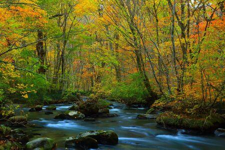 north cascade national park: Oirase Gorge in autumn Stock Photo