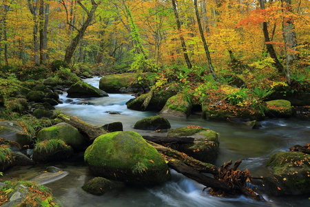 scenic spots: Oirase Gorge in autumn Stock Photo