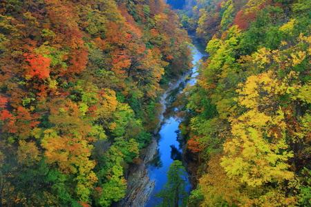 Oyasu Gorge leaves Imagens - 68432330