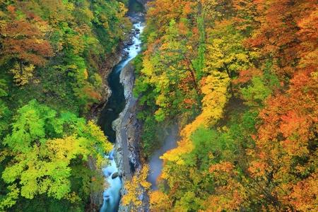 Oyasu Gorge leaves