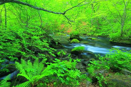 scenic spots: Oirase stream 3 turbulent flow