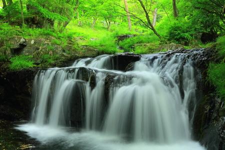 Small fresh green black waterfall