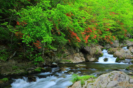 Greenery view with waterfall in Japan 写真素材