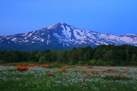 Chokai mountain mulberry wood-bog Stok Fotoğraf