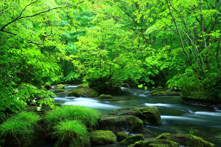 specification: Oirase stream in summer Stock Photo