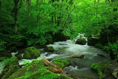 Oirase stream in summer Stock Photo