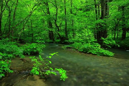 scenic spots: Oirase stream in summer Stock Photo