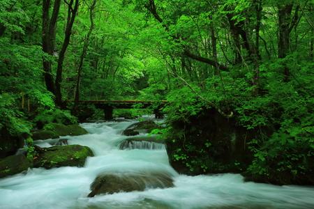 Oirase-stroom in de zomer Stockfoto