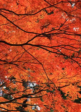 世界遺産・平泉中尊寺寺秋 写真素材 - 84726259