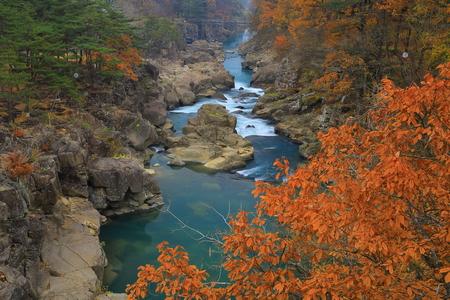 Yan meixi leaves