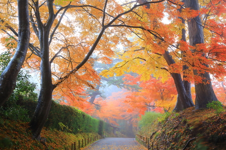 World Heritage hiraizumi in chuson-ji Temple autumn