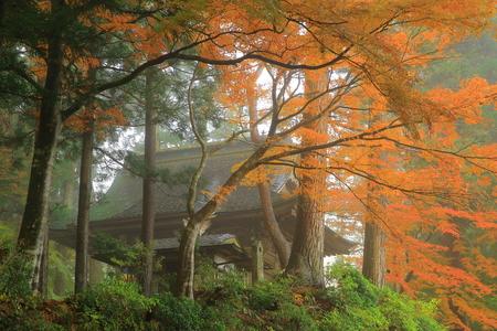 hiraizumi in chuson-ji Temple autumn Stock fotó