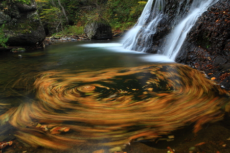 One-colored leaves waterfall