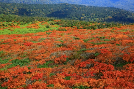 Mitsuishi piles of autumn leaves Stock Photo