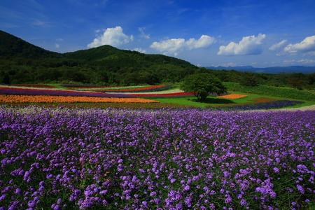 Miyagi Prefecture and flower gardens