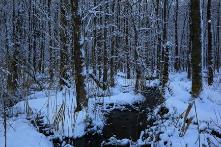 Sashimaki marshland in winter