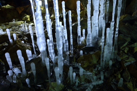 The common wood-Dong ice bamboo shoots 写真素材