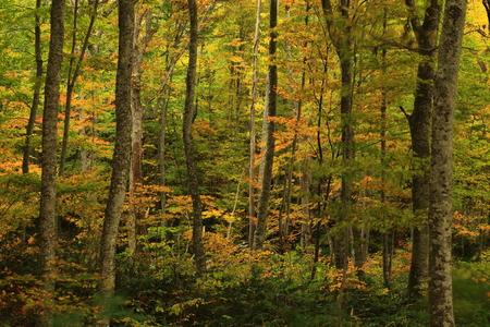 Ivy Marsh / swamp foliage Stock Photo