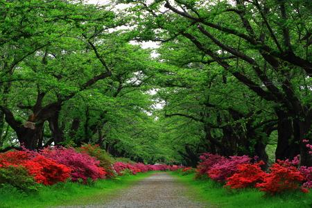Exhibition of Tokachi cherry tree rhododendron 免版税图像