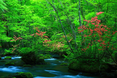 Oirase stream of fresh green. Stock Photo