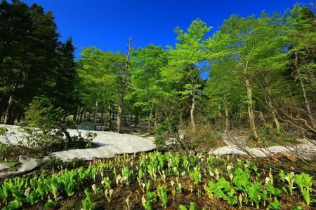 Hachiman-Taira spring OBA Valley bog