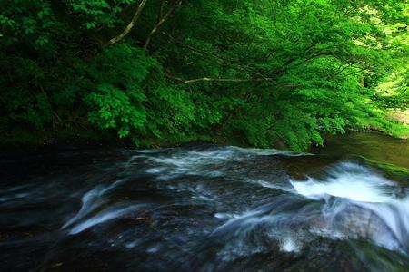 Summer kamabuchi falls