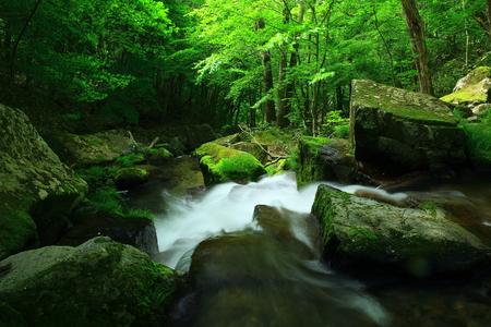 Waterfalls of Tono City Green