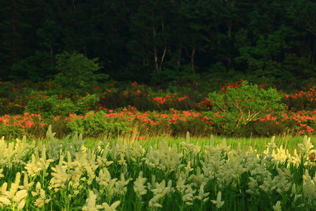 Hachiman-Taira summer Onuma