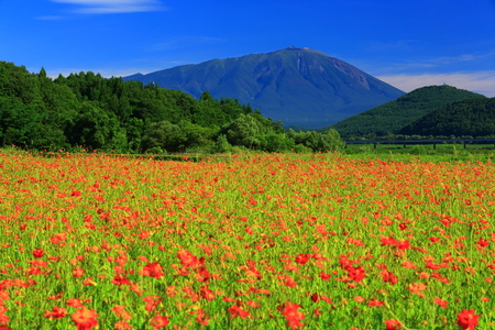 Iwate and Cosmos Stock Photo