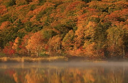 Autumn Onuma