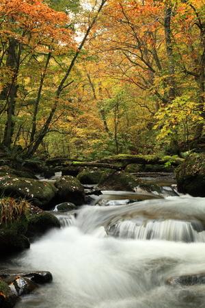 Oirase Gorge in autumn 写真素材