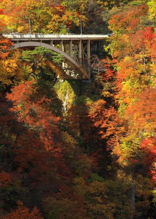 Naruko Gorge leaves 写真素材