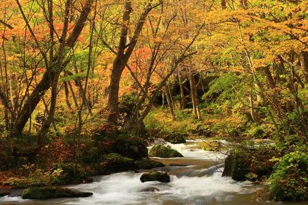 Oirase-Schlucht im Herbst