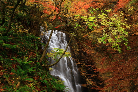 Colored leaves waterfall Stok Fotoğraf