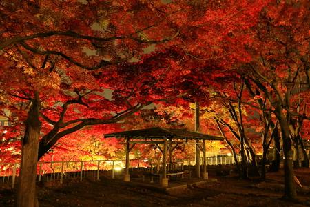 Iwate Park in autumn 報道画像