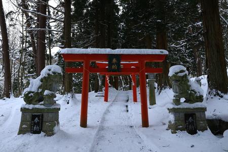 Cherry tree of immobility winter of matsukami Inc.
