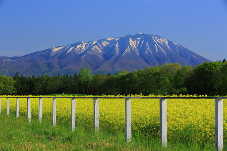 Rape field with mountain view in Iwate area, Japan