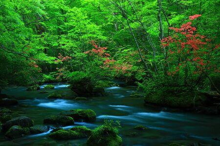 Oirase stream of fresh green.