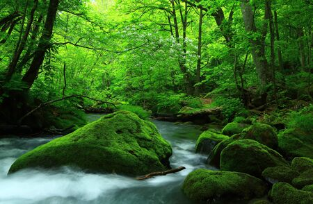 Oirase stream in summer 写真素材