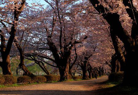 Spring exhibition of Tokachi district