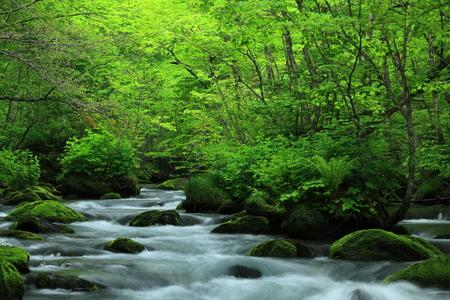 Mountain spring, Aomori Prefecture