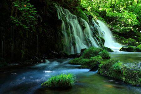Waterfalls of fresh green.
