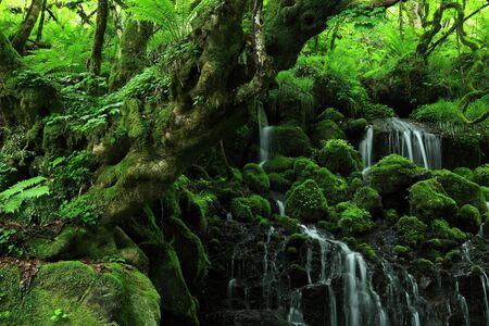 Cascade d'été de la préfecture d'Akita