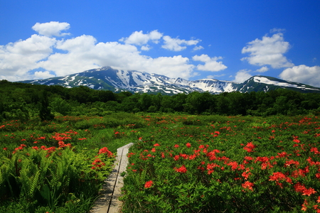 View of natural field in Japan