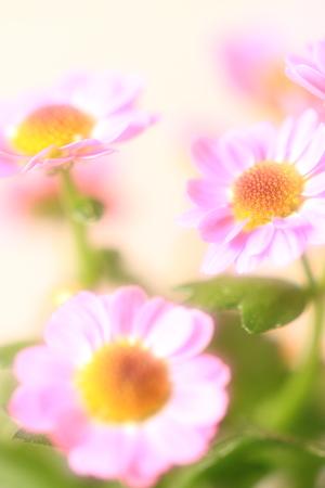 Flower image Stock Photo - 122369168