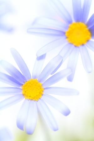 Flower image Stock Photo - 122369189