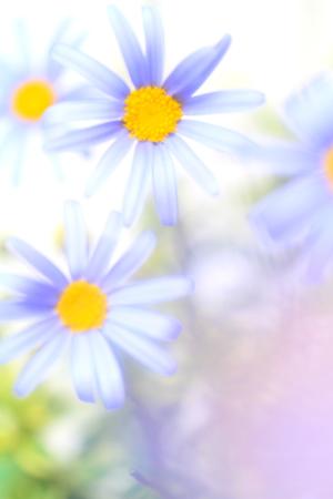 Flower image