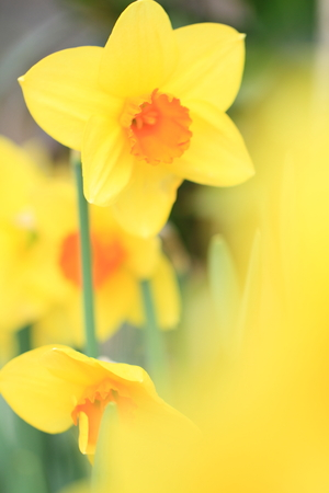 Flower image Stock Photo - 122369236