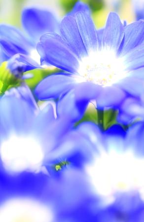 Flower image Stock Photo - 121742086