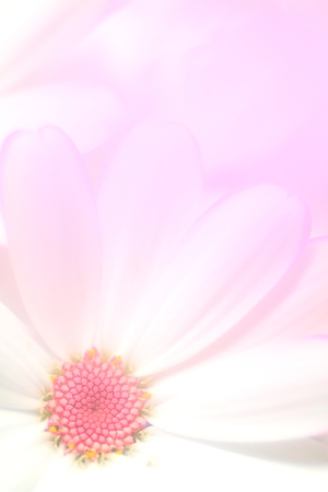 Flower image Stock Photo - 121742424